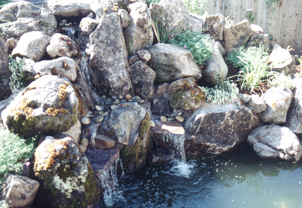 Sonoma County water feature and Koi pond