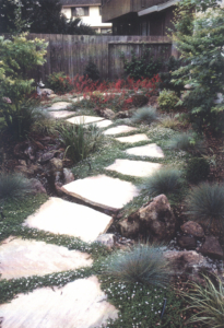 Flagstone stepping stones planted with isotoma