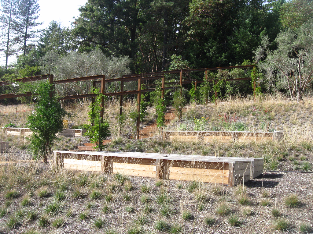Native grass restoration with potato vine arch way through raised veggie bed garden.