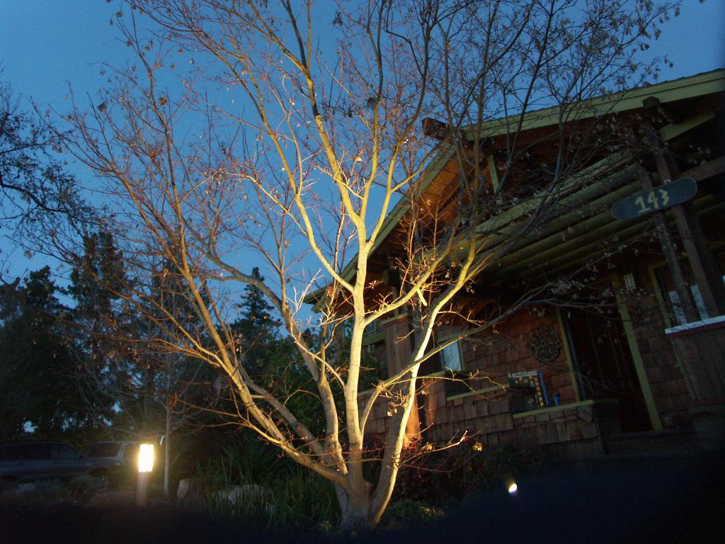 Japanese Maple uplit from below, bollard light