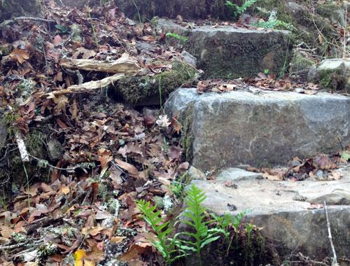 Natural hillside stairway